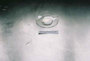Oenothera Biennis [Evening Primrose] Oil