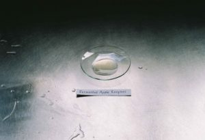 Fermented Apple Enzymes